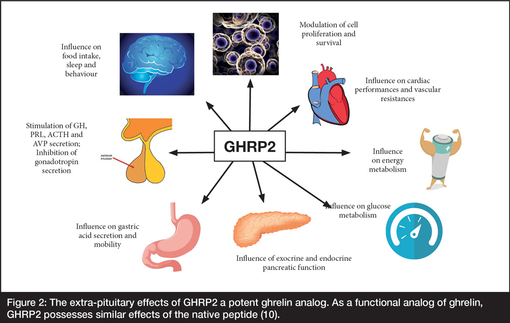 A spider diagram of the extra pituitary effects of GHRP2