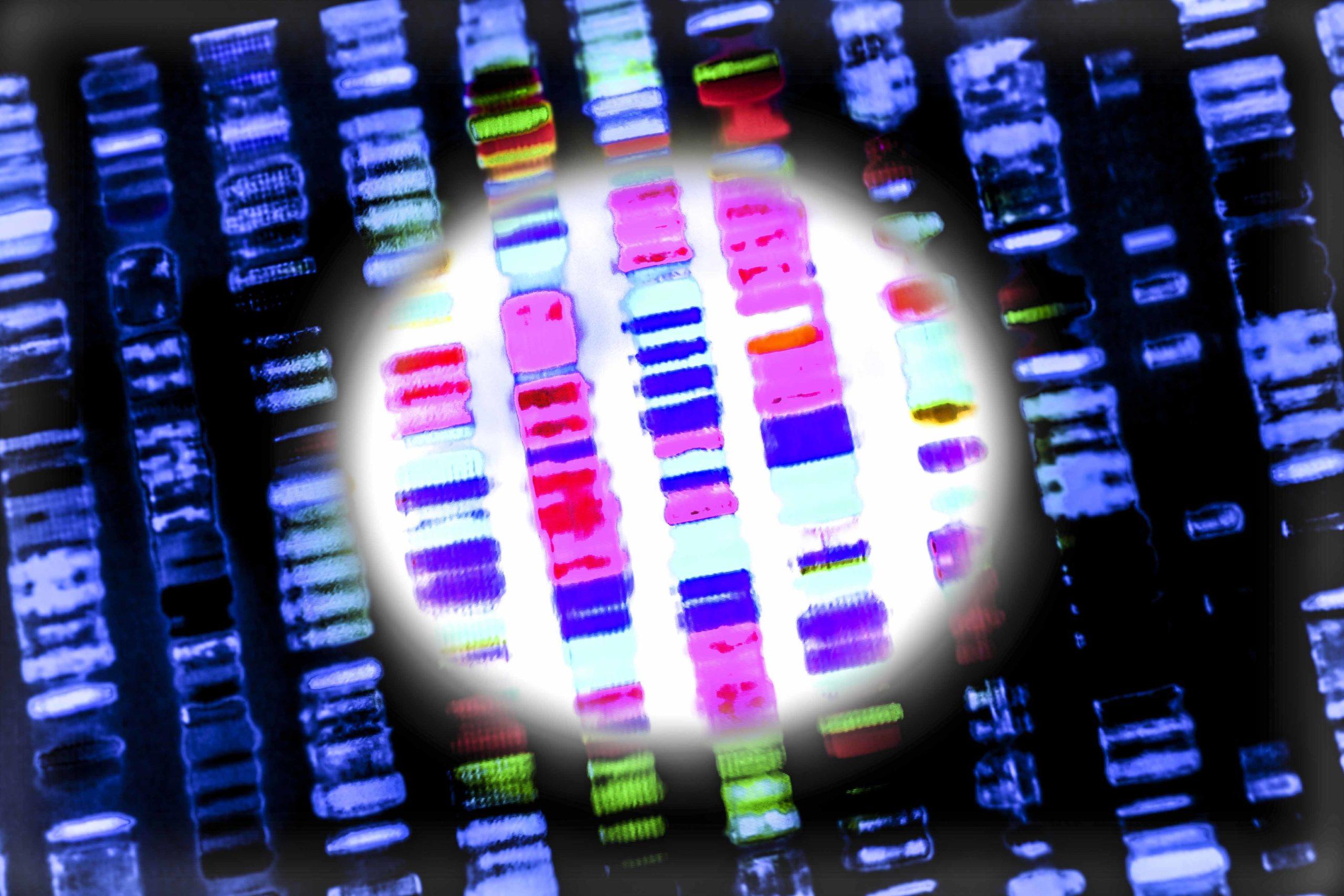 Genomic typing of human DNA