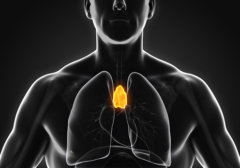 A person with the thymus gland glowing in yellow