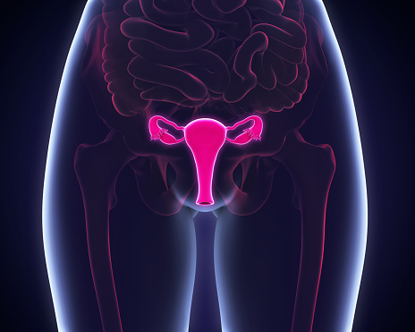 A 3D diagram of a woman's body with a highlight on the reproductive system