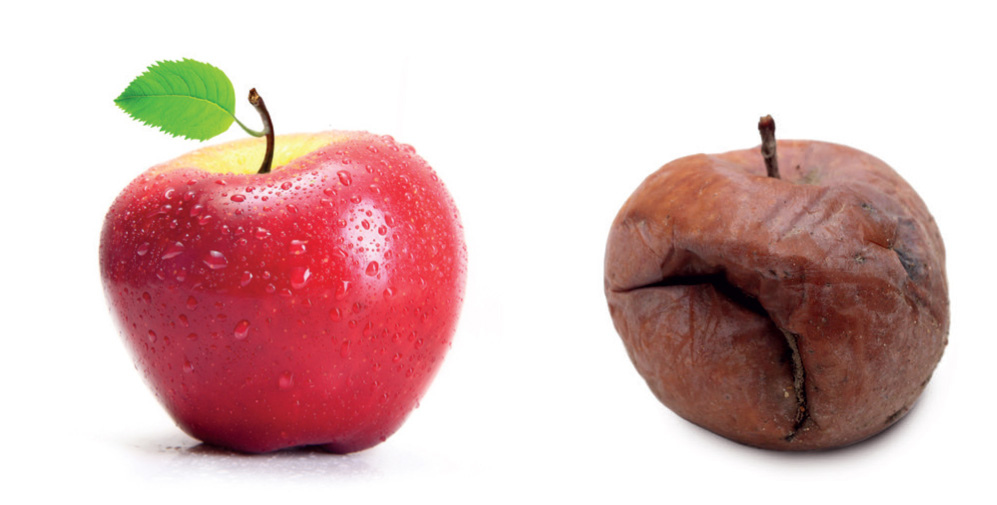 Two red apples, one is fresh and the other old and wrinkly