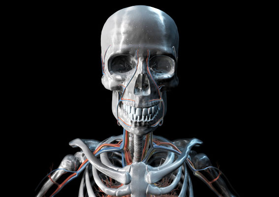 3D metal skeleton with blue and red veins