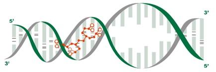 peptide-bl-fig-1