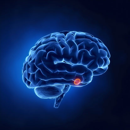 Glowing blue brain with a red highlighted dot