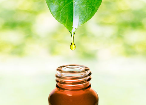 A green plant leaf dropping oil into a brown glass bottle
