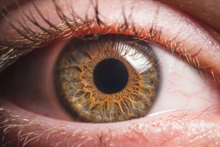 Close up of a hazel eyeball