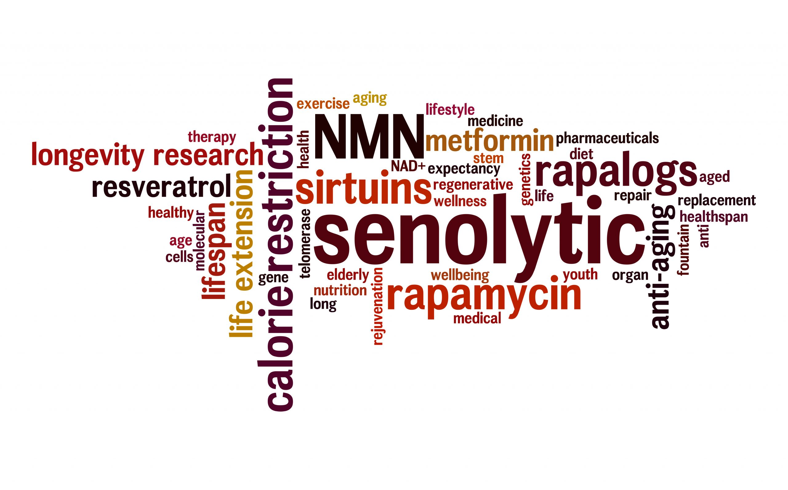 Word cloud including senolytic, rapalogs, sirtuins and more