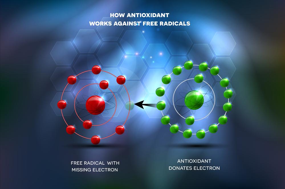 Diagram of how antioxidants work against free radicals