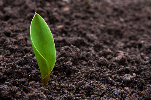 A small green leaf sprouting out of fresh brown soil